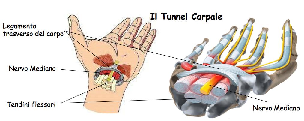 tunnel carpale